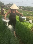 Mary farming in VietNam